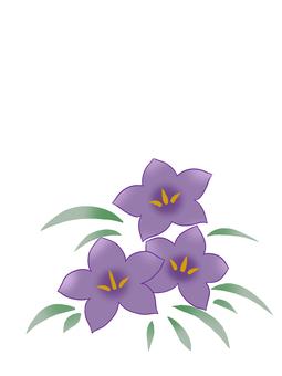 Three purple purple bellflower flowers