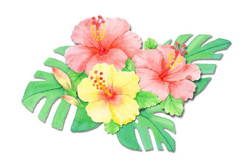 Summer flower hibiscus ★ 0148-F