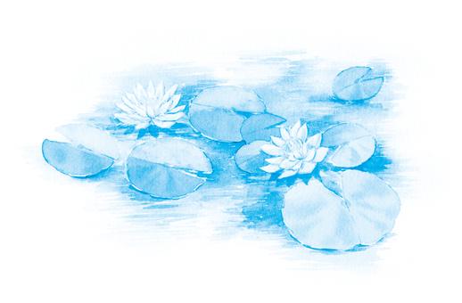 Lotus flower light blue