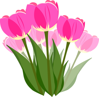 151 Tulip