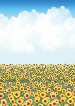 Sunflower field (vertical)