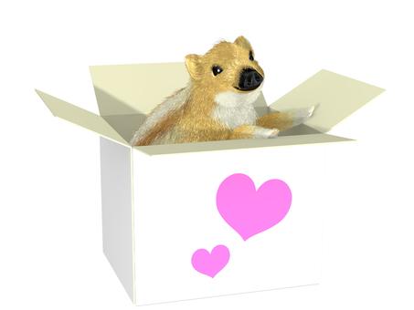 Boxed Uri Bunch _ 001