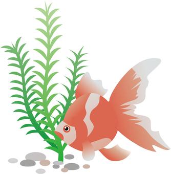 Illustration of goldfish and aquatic plants