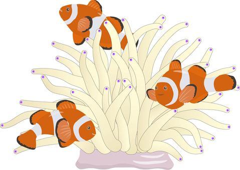 Clownfish and Shilite Anemone