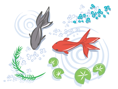 Goldfish and aquatic plants