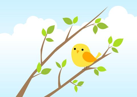 Mr. Birds 7