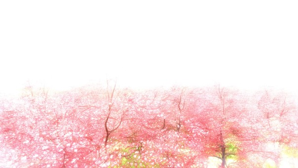 Season of cherry blossoms