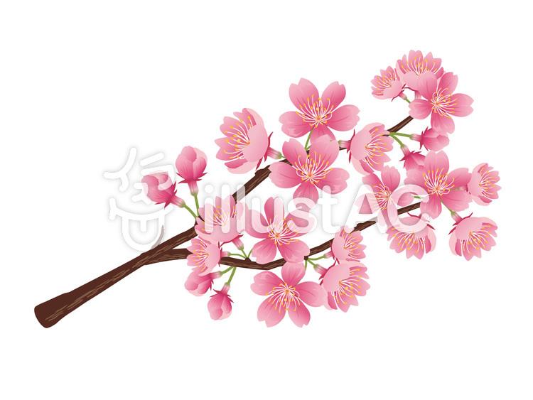 春リアルな桜の枝素材挿絵01イラスト No 723192無料イラストなら
