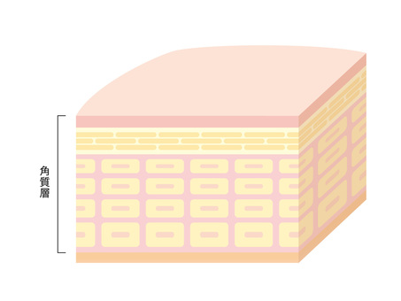 Sectional view of skin _ 3 D_ to the stratum corneum