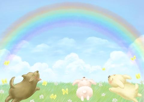 虹と駆け回る