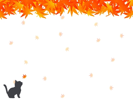 Cats and autumn leaves