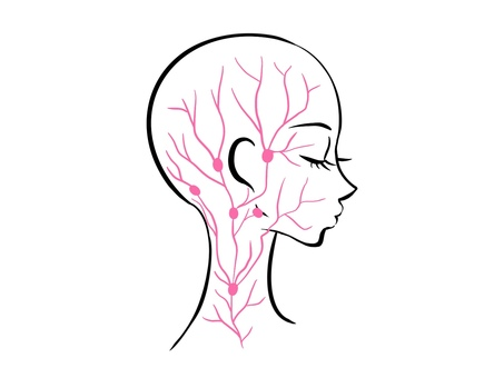Lymphatic profile