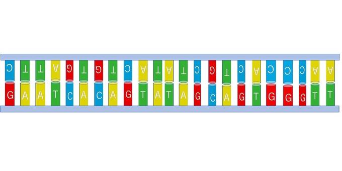 DNA (straight line, two locks)