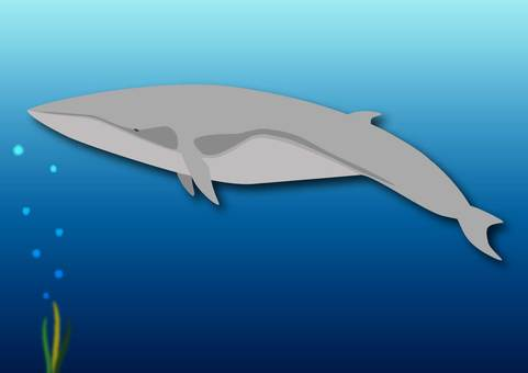Submarine whale