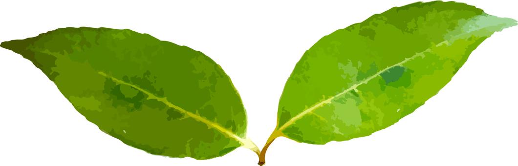 Green Futaba