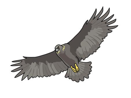 검 독수리