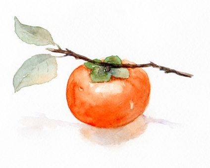 Persimmon drawing with transparent watercolor