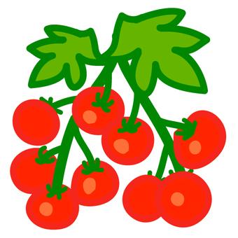 주렁주렁 토마토 1