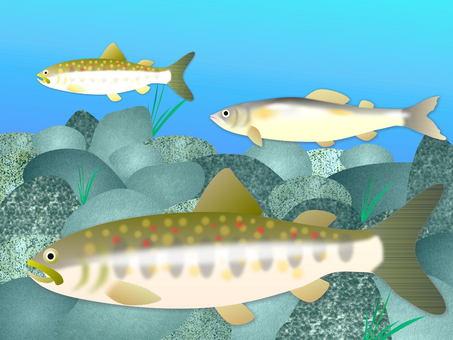 Rock fish and sweetfish