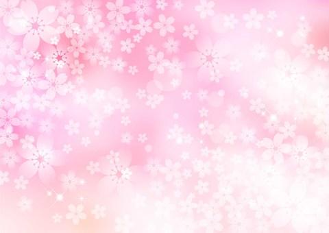 Sakura _ pink _ pale background 1773