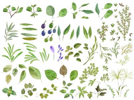 Leaf material
