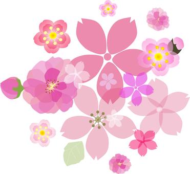 벚꽃과 복숭아와 매화