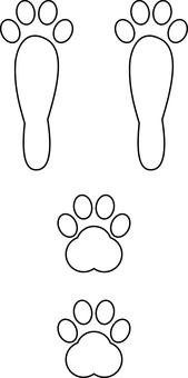 Footprint of rabbit