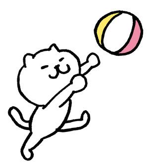 Cat Beach Volleyball
