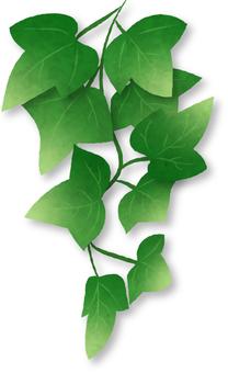 Ivy separately