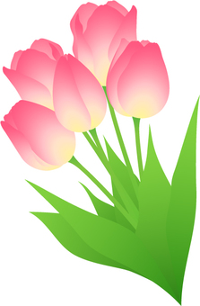 Tulip _ bouquet
