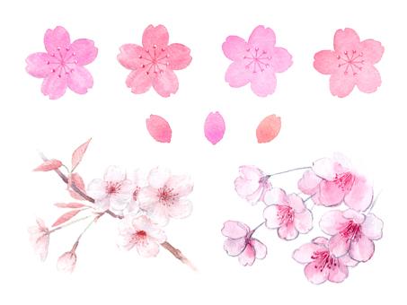 Watercolor Sakura material set
