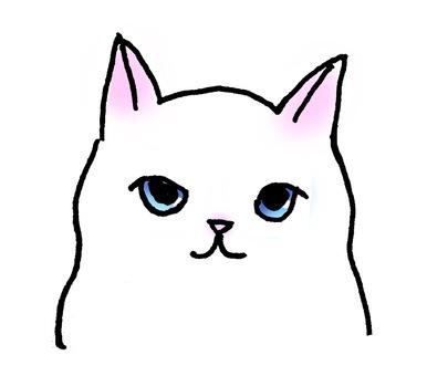 Blue eyes white cat