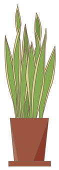 관엽 식물 산세베리아