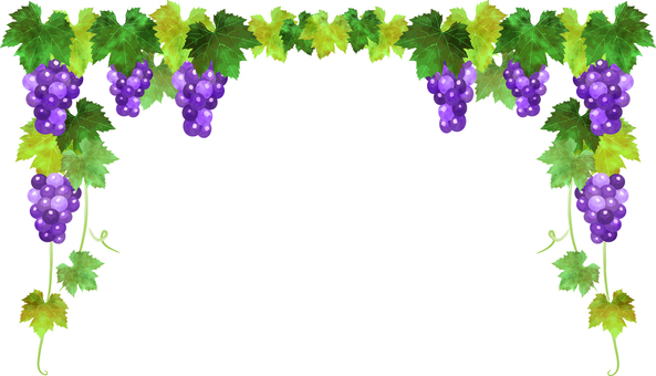Watercolor style grape background transparent ant