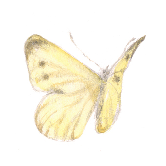 Butterfly 1 - yellow butterfly