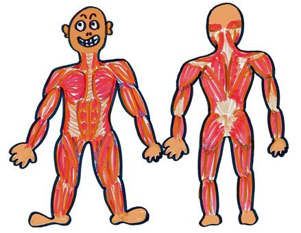 創建骨骼肌肉