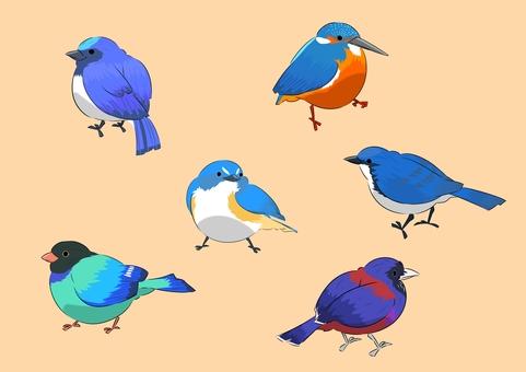 Plump blue bird