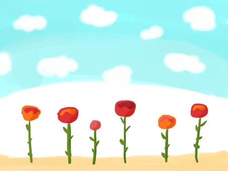 天空和罌粟