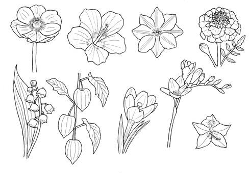 꽃 6 히비스커스