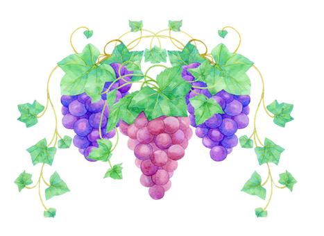 Grapes ★ 0237-Ku