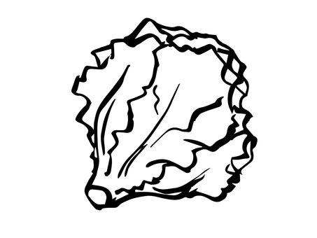 Black and white lettuce