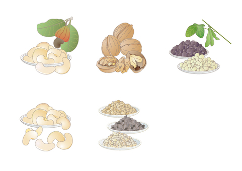 Display Recommended Raw Material 20 items _ bean nuts