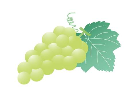 Muscat or grapes 3