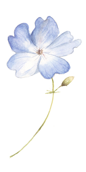 小花8  - 開花