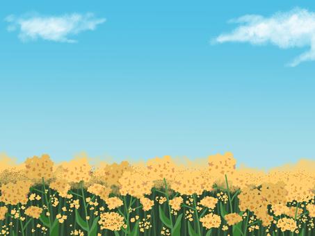 유채 꽃밭