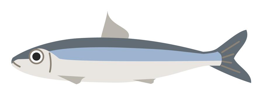 Sardines (fish)