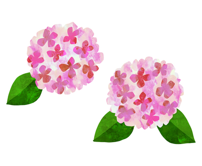 Hydrangea watercolor illustration <Pink>
