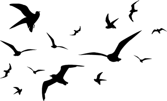 Seagull's silhouette