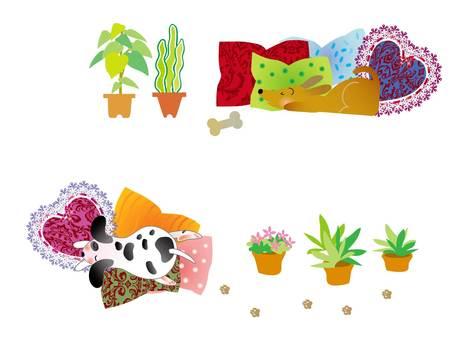 Dog-foliage plant 02