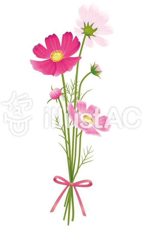 秋の花コスモス花束リボン02イラスト No 536801無料イラストなら